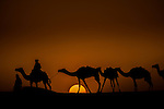In the Sahara Desert, which is larger than the continental United States, time seems to stand still. This image of silhouetted camels and salt traders in Mali documents a way of life unchanged for centuries.