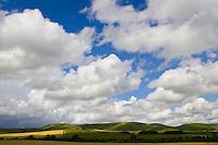 Marlborough Downs, Wiltshire, England, United Kingdom