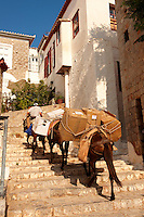 Pack Ponies climbing the steps on Hydra,  Greek Saronic Islands