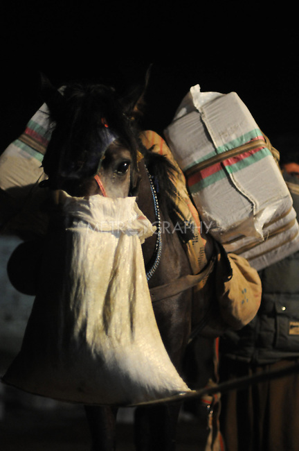 BASHMAKH, IRAQ: A smuggler's horse waits with a feed bag after being loaded with alcohol to take into Iran...Iranian Kurdish smugglers traffic petrol from Iran into Iraq and alcohol from Iraq into Iran.  On foot, a smuggler can look to make around $10 per trip whereas with a horse a smuggler can make $100.  The routes are very dangerous with the risk of stepping on land mines or  being shot by the Iranian military..Photo by Kamaran Najm/Metrography