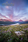 sinopah mountain wild flowers glacier national park blackfeet reservation