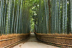A rural pathway winds through a bamboo forest within Kyoto's famous Temple Garden district.