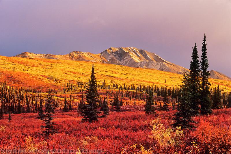 Autumn tundra and taiga in Denali National park, Alaska.