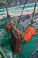 Trawl net sensors hanging from net during a pelagic trawl for herring in Barents sea