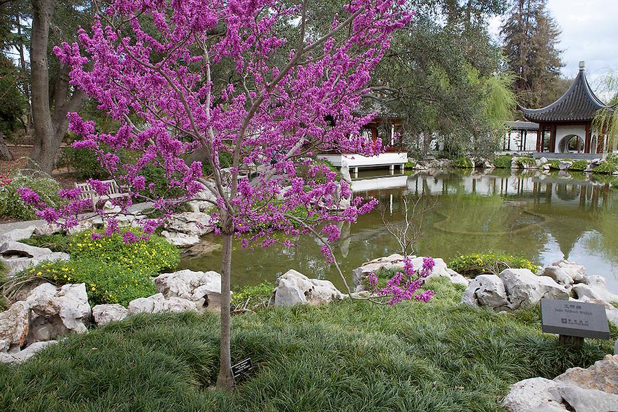 Chinese Garden, Huntington Garden, California, CA, USA