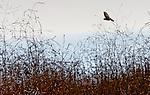 Bird in Bush 1, Crystal cove, CA.