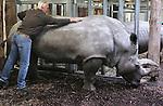 Foto: VidiPhoto<br /> <br /> ARNHEM - Een drukke ochtend voor dierentuinarts Henk Luten vrijdag in Burgers' Zoo in Arnhem. Als eerste moest de huid van twee neushoorns gecontroleerd en ingevet worden. Met name de stokoude breedlipneushoorn Freya had last van een droge huid, waardoor scheuren en dus infecties kunnen ontstaan. Neushoorn Gingabella kreeg een flinke schrobbeurt (foto) om losse huidschilfers te verwijderen. Freya is de laatste in het wild gevangen neushoorn van de Arnhemse dierentuin. Indertijd nodig om de soort te redden. De meeste neushoorns in dierentuinen worden geboren door eigen fok, of die van andere dierenparken.  Vervolgens moesten de hoeven van een ellips waterbok bekapt worden en werd met een echo gecontroleerd of het dier zwanger was omdat het park een nieuw, jong, mannetje in de kudde heeft. Van bevruchting bleek nog geen sprake. Tot slot werd een pasgeboren dikdik gechipt voor transport naar een Franse dierentuin. De dikdik behoort tot een van de kleinste antilopensoorten.