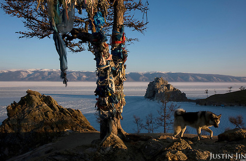 A tree drips with prayer rags on Olkhon Island on Lake Baikal in Siberia, Russia, near the shaman rock.  .They are a group of five people: Justin Jin (Chinese-British), Heleen van Geest (Dutch), Nastya and Misha Martynov (Russian) and their Russian guide Arkady. .They pulled their sledges 80 km across the world's deepest lake, taking a break on Olkhon, the world's forth-largest lake-bound island. They slept two nights on the ice in -15c. .Baikal, the world's largest lake by volume, contains one-fifth of the earth's fresh water and plunges to a depth of 1,637 metres..The lake is frozen from November to April, allowing people to cross by cars and lorries.