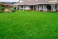 Freshly mowed lush lawn in front of house