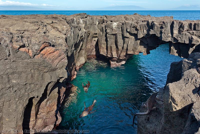 Galapagos sea lions rest in a protected cove, James Bay, Stantiago Island, Galapagos Islands, Ecuador.