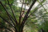 Plant History Glasshouse (formerly Australian Glasshouse), 1830s, Rohault de Fleury, Jardin des Plantes, Museum National d'Histoire Naturelle, Paris, France. Low angle view of a cyathea australis trunk against the glass and metal structure of the glasshouse.