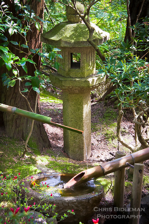 The Buried Shaft (Bonji Doro) stone lantern is behind a water basin with a bamboo drip fountain and blooming azalea in the foreground at the Portland Japanese Garden in Oregon