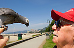"""Kenneth Richardson, AKA """"The Bird Man"""" and Babe, his 20-year-old Congo African Gray Parrot enjoy the beautiful spring weather at Ambleside Park in West Vancouver on Monday, June 1, 2009."""