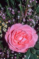 Rosa Sweet Promise aka Sonia = Meigoudea rose pink