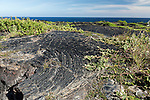 Hawai'i Volcanoes National Park, Big Island of Hawaii, Hawaii; lava rock and vegetation on the cliffs overlooking the Pacific Ocean at the end of the Chain of Craters Road