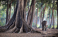 Rajan and small boy walking through an old growth forest on Havelock island in the Andamans