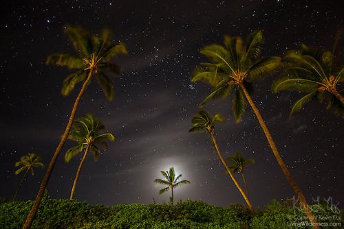 Night Sky Over Palm Trees, Makena Beach, Maui, Hawaii