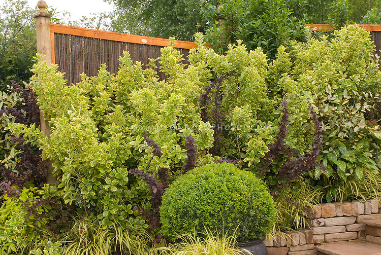 Garden Design for Privacy with Shrubs & Hedges