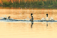 &quot;Two's Company; Three's a Crowd&quot;<br />