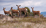 California: Deer at Lava Beds National Monument. Photo copyright Lee Foster california117699.