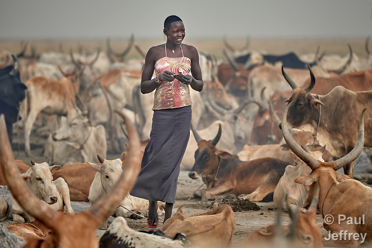 A young Dinka woman walks among cattle in Dong Boma, a village in South Sudan's Jonglei State. Most of the families in the village recently returned home after being displaced by rebel soldiers in December, 2013, and they face serious challenges in rebuilding their village while simultaneously coping with a drought which has devastated the cattle herds that provide a foundation for their economy and culture.<br /> <br /> The Lutheran World Federation, a member of the ACT Alliance, is helping the villagers restart their lives with support for housing, livelihood, and food security.