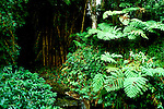 HI:  Hawaii Volcanoes National Park, Big Island, Tropical Rain Forest, ferns   .Photo Copyright:  Lee Foster, lee@fostertravel.com, www.fostertravel.com, (510) 549-2202.Image: hivolc203