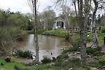 Pond at Roaring Camp in Felton