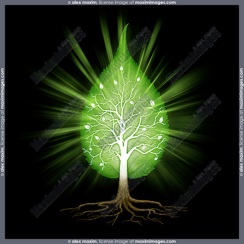 Green leaf shaped tree with branches and roots nature infinite fractals spiritual zen concept isolated on black background. Conceptual photo illustration.