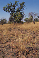 Savanna cerrado biome, grassland, wooded savanna, saxicolous ecosystems; trees, flowers