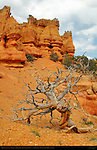 Tree Skeleton below the Towers, Arches Trail, Losee Canyon Area, Red Canyon, Dixie National Forest, Utah
