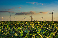 Windmills over a soybean field in Illinois.
