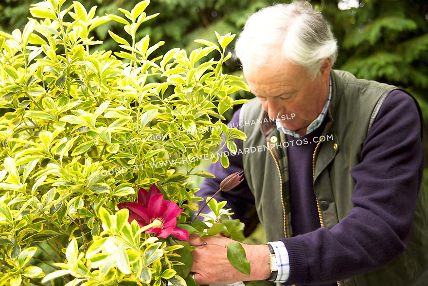 British gardener, Raymond Evison, of the Guernsey Clematis Nursery, adds a bright pink clematis vine to a mixed container.