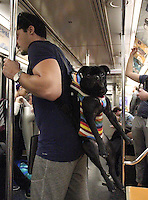 NEW YORK, NY - OCTOBER 18:  Dog in a backpack travels with his owner on the subway in New York, New York on October 18, 2016.  Photo Credit: Rainmaker Photo/MediaPunch