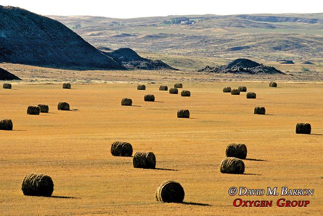 Montana Scenic