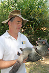 David Lindenmayer Holding Mountain Brushtail Possum