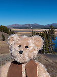 A stuffed teddy bear sits in front on mountains in Yellowstone National Park.