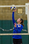 1 November 2015: Yeshiva University Maccabee Outside Hitter, Setter, and team co-Captain Shana Wolfstein, a Senior from Burlington, VT, hits against the Saint Joseph College Bears at SUNY Old Westbury in Old Westbury, NY. The Bears shut out the Maccabees 3-0 in NCAA women's volleyball, Skyline Conference play. Mandatory Credit: Ed Wolfstein Photo *** RAW (NEF) Image File Available ***