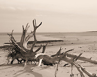 Driftwood at Big Talbot Park on Amelia Island Fl I took this image on Christmas afternoon 2012 as it reminded me of the quiet and solitude one might seek for a reflective moment.