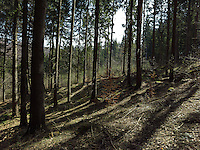 FOREST_LOCATION_90201