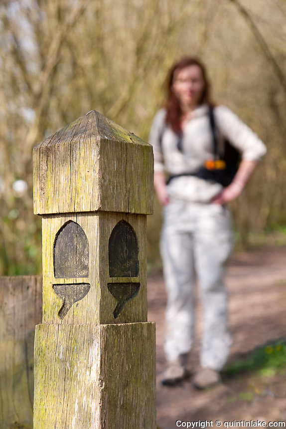 A woman stands on the Cotswold Way next to the National Trail Acorn marker post.