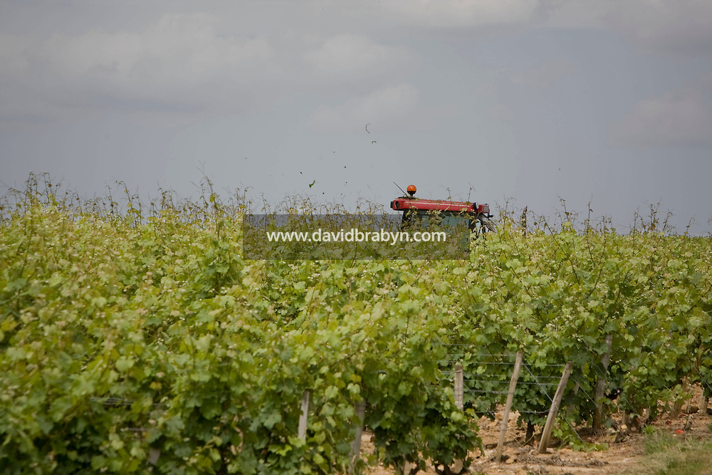 A farmer works in vineyards in Vouvray, France, 26 June 2008.