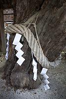 Götterseil (shimenawa) und Zickzackpapier ( shide oder gohei) in temple in Kyoto, Japan. Bewegt sich das gefaltete Papier im Wind, sind die Götter anwesend.