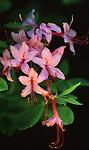 Spring, Pennsylvania Wildflowers,