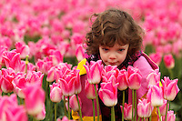 Girl in smelling pink tulips, Skagit Valley, Washington, USA