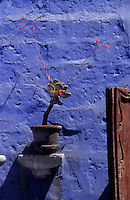 Amérique/Amérique du Sud/Pérou/Arequipa : Rue Corbora - Détail    maison