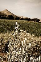 Baglio di Pianetto, Sicily, Italy