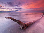 Driftwood in a beautiful tranquil red sunset scenery at lake Huron, Pinery Provincial Park, Grand Bend, Ontario, Canada.