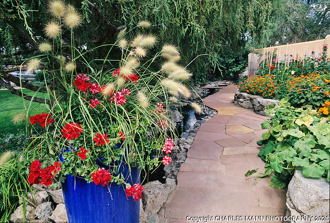 Susan Blevins of Taos, New Mexico, created an elaborate home garden featuring containers, perennial beds, a Japanese themed path and a regional style that reflectes the Spanish and pueblo architecture of the area. Ornamental Pennisetum grass and bright red geraniums clash happily with a cobalt blue container in Susan's Japanese garden.