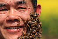 Luoping, Yunnan. Le visage de Yang Chuan est recouvert de milliers d'abeilles.///Luoping, Yunnan.  Yang Chuan's face covered in thousands of bees.