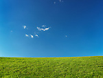 Green grassland landscape under blue clear sky lit by sunlight. Nature backdrop background.